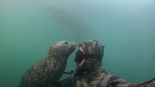 Touching Moment A Seal Hugs Diver And They Instantly Become Friends - Video