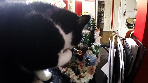 Cat can't resist running water in Christmas decoration