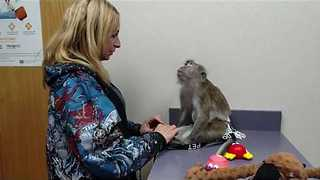 Nervous Pet Monkey Gets Foot Rub Before Vet Visit - Video
