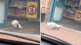 Feeling A Bit Peckish? Shameless Seagull Caught On Camera Shoplifting Entire Loaf Of Bread