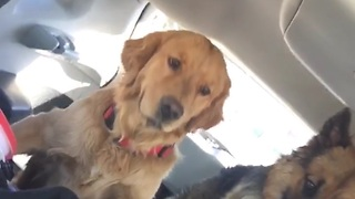 Woah! Brake CHECK! Dog flies in the car!  - Video