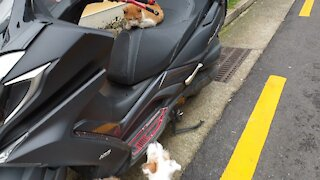 The stray cat is relaxing on the motorcycle