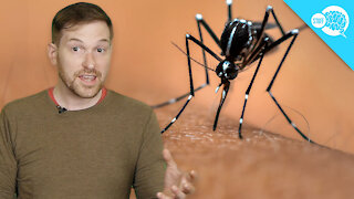 BrainStuff: Are Some People Immune To Mosquitos?