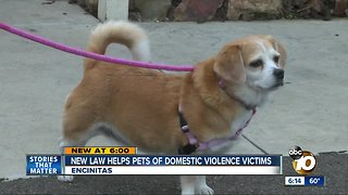 New law helps pets of domestic violence victims