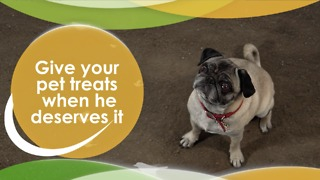 Give your pet treats when deserved - Video