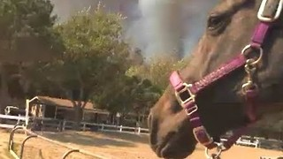 Horses Evacuated From Park, Riding Center in Orange County - Video