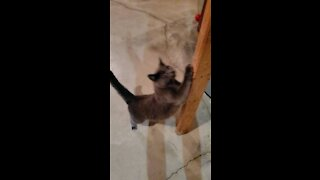 Meeting My Cats!!