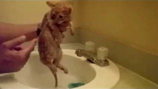Tiny Kitten Takes First-Time Bath - Video