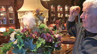 Funny Cat Loses Patience with Teasing Grandpa  - Video