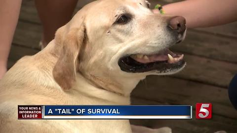 Dog Miraculously Survives Being Hit By Train