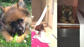 Real-life 'Andrex puppy' caught unrolling toilet paper through house at 4am every night