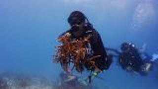 Volunteer Underwater In The Florida Keys - Video