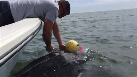 Leatherback Sea Turtle saved from crab trap by JSO Officers