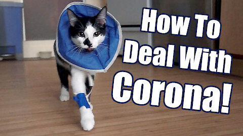 Cat demonstrates 8 ways to deal with the Coronavirus