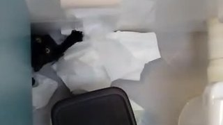 Cat obliterates toilet paper roll - Video
