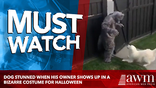 Dog Stunned When His Owner Shows Up In A Bizarre Costume For Halloween - Video