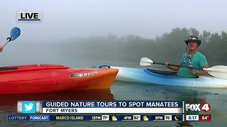 Guided Kayak Nature Tours help spot manatees in Southwest Florida - 8am live report