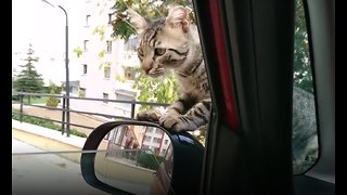 Street Cat Takes Adoption Into Own Hands - Refuses to Leave Car - Video
