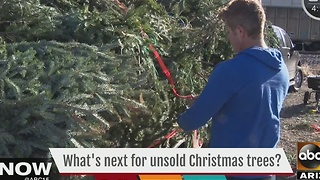 Where do all the unsold Christmas trees go? - Video