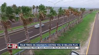 Palms planted under FDOT's multi-million dollar landscaping plan dying from disease - Video