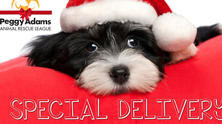 Peggy Adams Animal Rescue Christmas delivery - Video