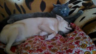 Cat couldn't care less about dog's affection - Video