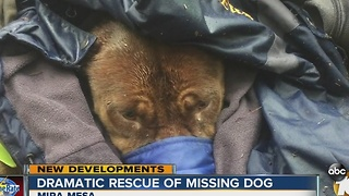 Missing dog rescued from canyon, taken to the vet - Video