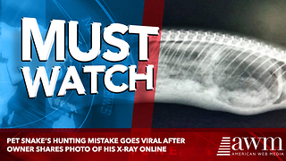 Pet Snake's Hunting Mistake Goes Viral After Owner Shares Photo Of His X-Ray Online - Video