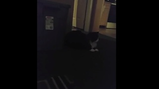 Cat releases mouse, causes panic in house - Video