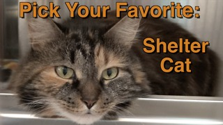 Adorable shelter cats: Pick your favorite! - Video