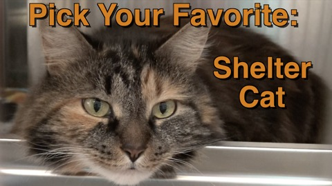 Adorable shelter cats: Pick your favorite!