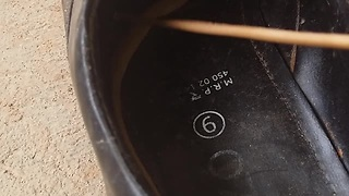 Here Is Why You Should Always Check Your Shoes Before Stepping In - Video