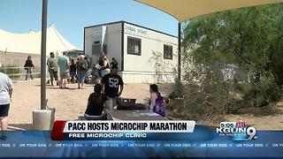 Pima Animal Care Center to host microchip clinic - Video