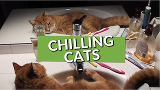 This Collection Of Cats Chilling Is Why You Love These Pets! - Video