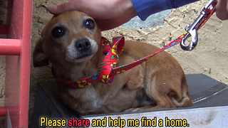 A sick three legged dog sleeps in the rain on a shoebox and waits months to be rescued - Video