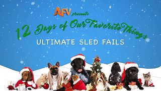 AFV's 12 Days of Christmas Ultimate Sled Fails - Video