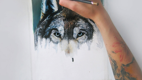 Incredible wolf time lapse drawing