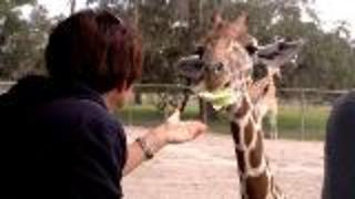 Giraffe Ranch -  An Amazing Safari Experience - Video