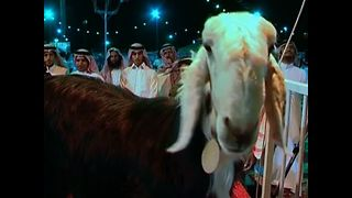 Goat Beauty Pageant - Video