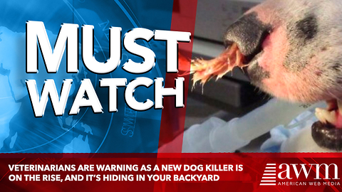 Veterinarians Are Warning As A New Dog Killer Is On The Rise, And It's Hiding In Your Backyard
