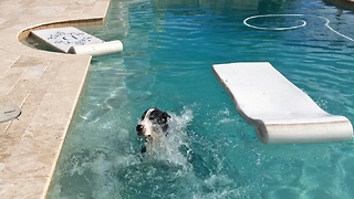 Great Dane swims and shakes in slow motion - Video