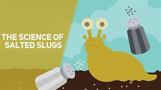 The science behind salted slugs - Video