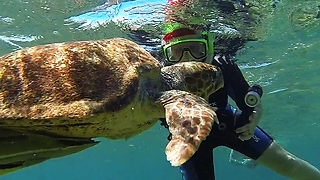 Huge Sea Turtle Tries To Chomp On Swimmer's Camera - Video