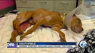 Animal control rescues dog found tortured - Video