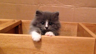Fluffy kitten performs super cute escape routine - Video