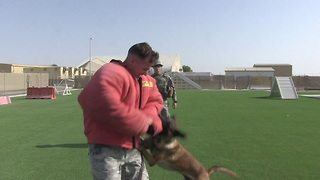 Military Working Dog - A Defender's Best Friend - Video