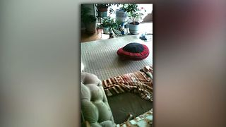 Pug Takes His Bed For A Sping