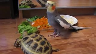 Parrot loses it after seeing turtle's reflection in mirror - Video