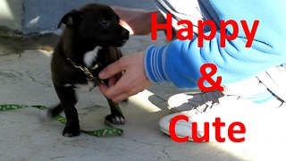 Happy cute puppy playing  - Video