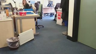 Crazy Dog Wreaks Havoc Around Office - Video